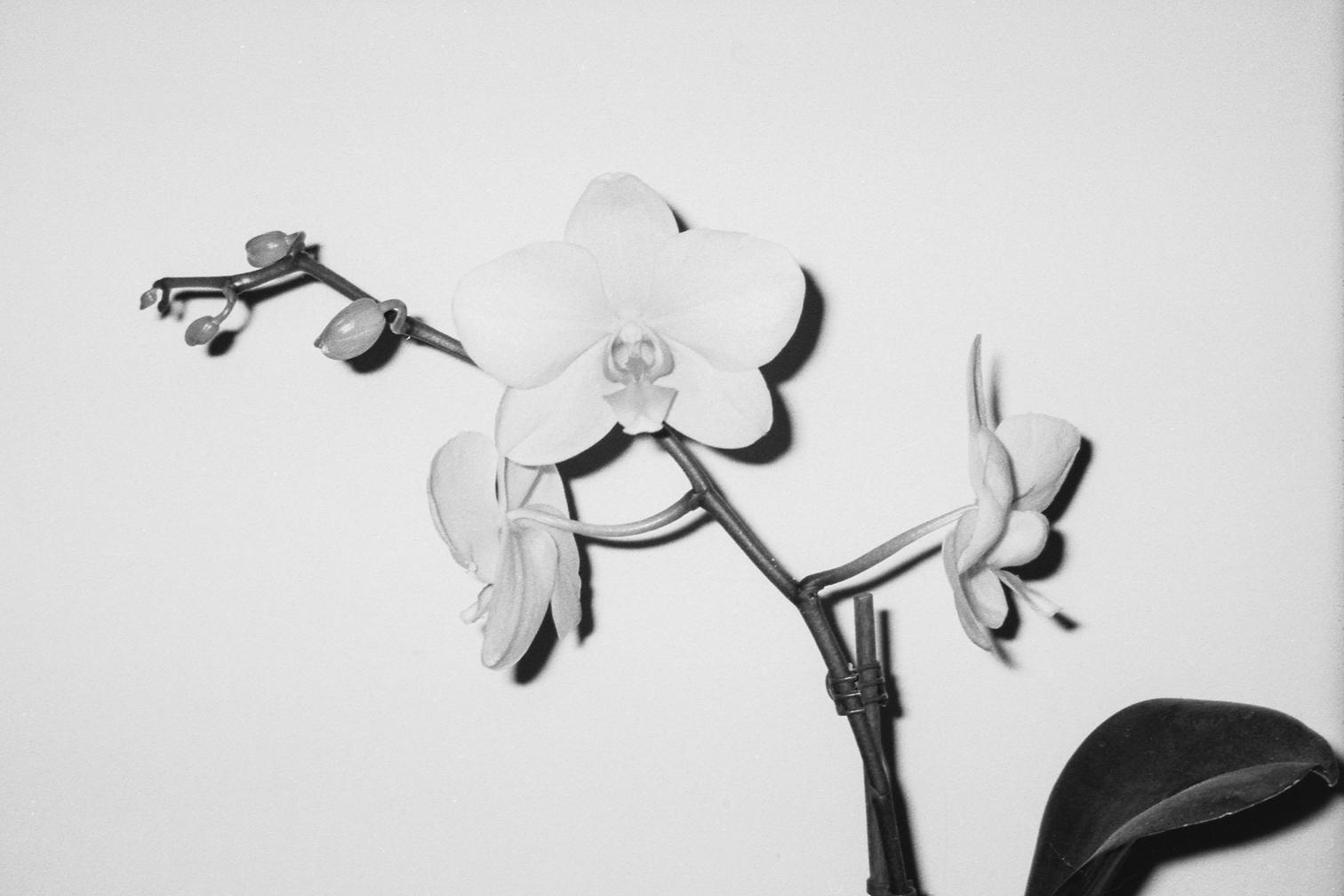 Daniela Antonucci Studio Fotografico